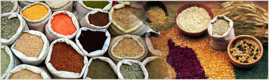 Indian-Millet-Grains-Exporters